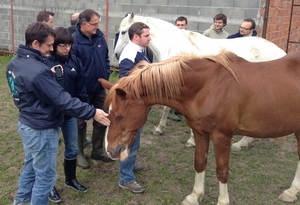 Equi-coaching ISRI-CORNUET - Article témoignage photo 1 (ISRI)